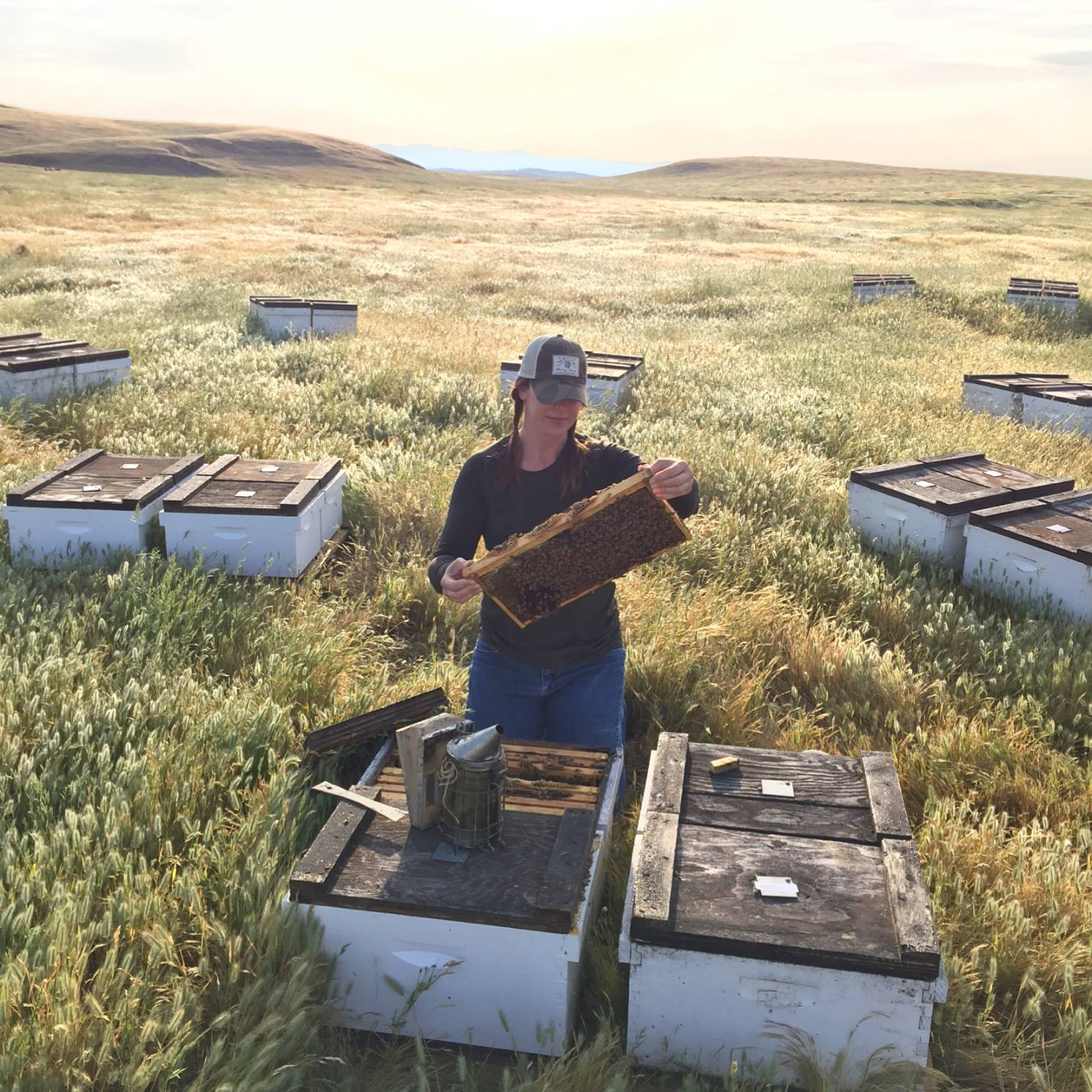 bee keeper observing honey in bee boxes
