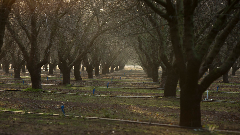 Land IQ Releases 2020 Final Estimate of California Almond Acreage