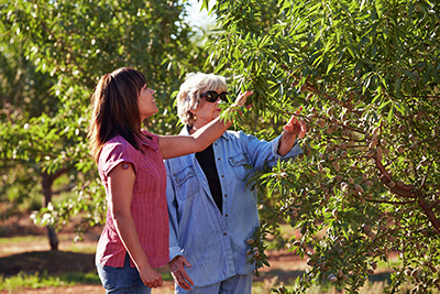 Nutrient Management in the orchard
