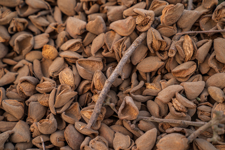 Almond Stockpile