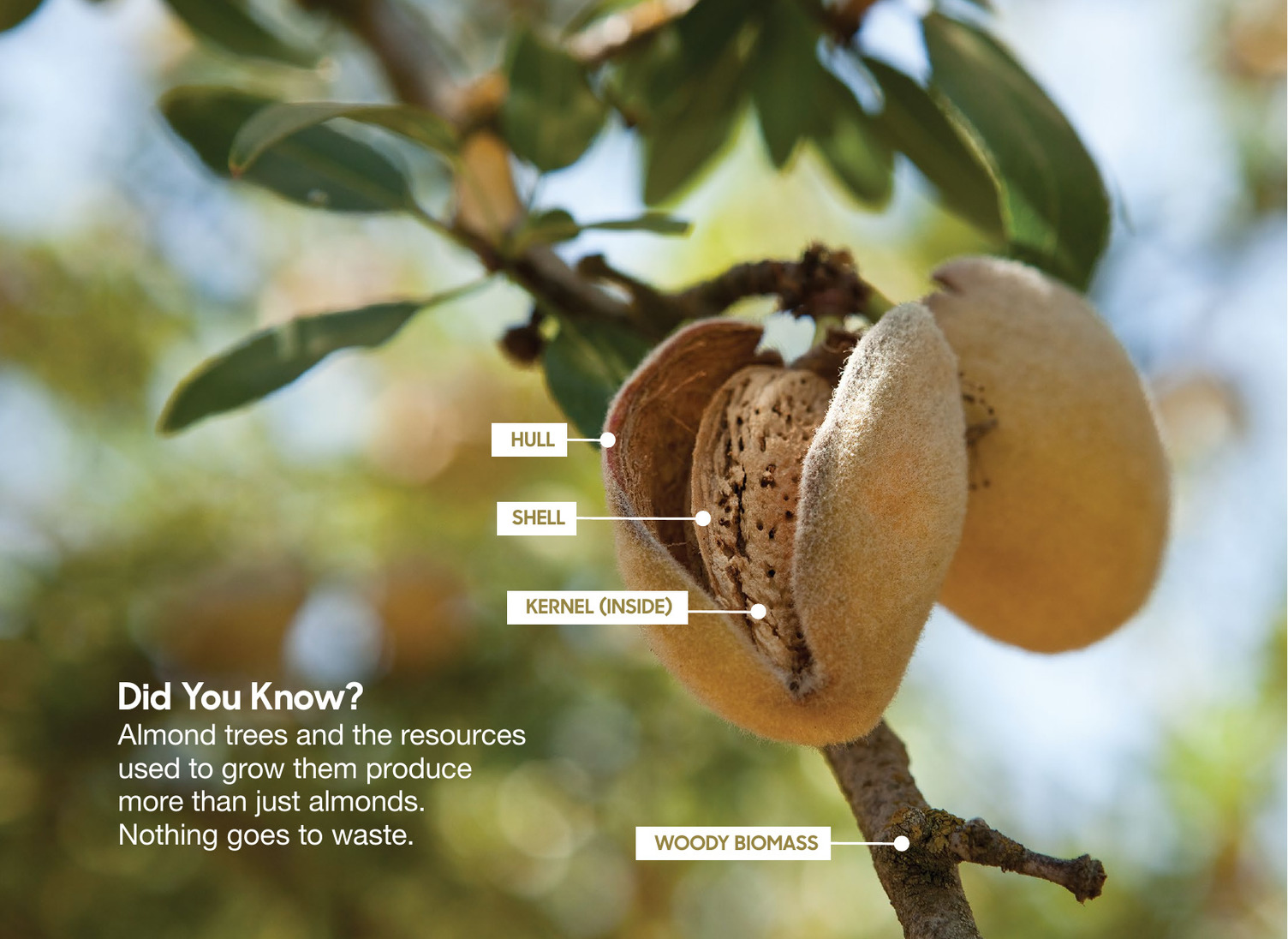ALMOND BOARD CROP REPORTS