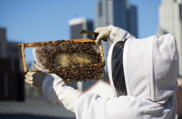 bee keeper extracting honey.png