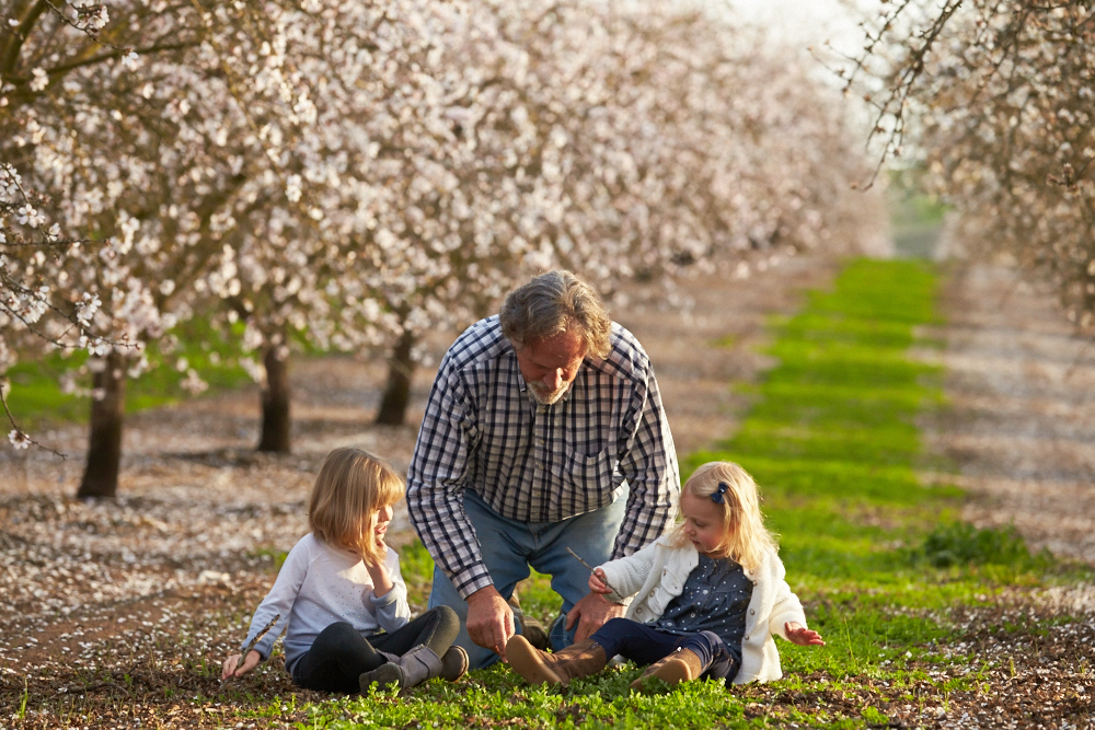 Grandpa playing with his two granddaughters in a blooming almond orchard.