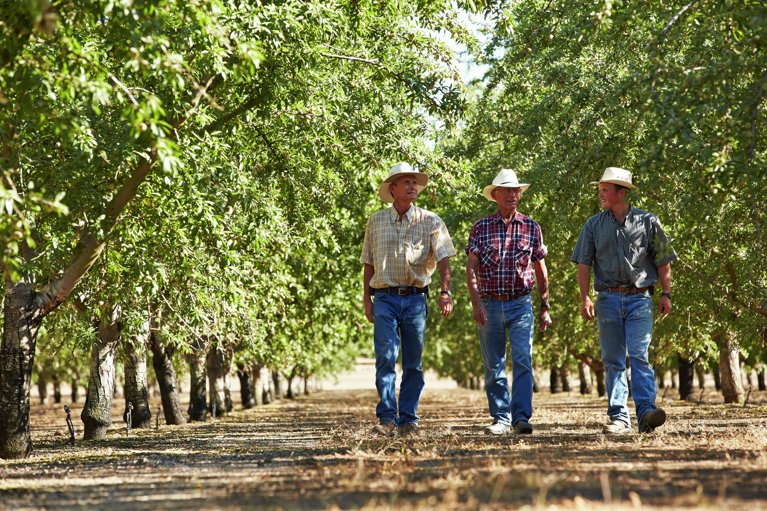 Three generations of California Almond farmers walking through an almond orchard.