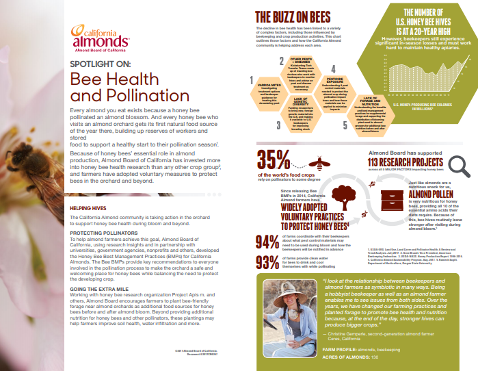 spotlight on bees factsheet